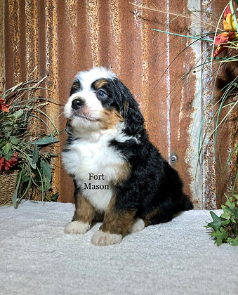 Titus (Reserved)