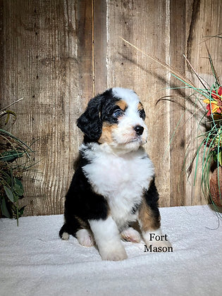 Fiona (Reserved)