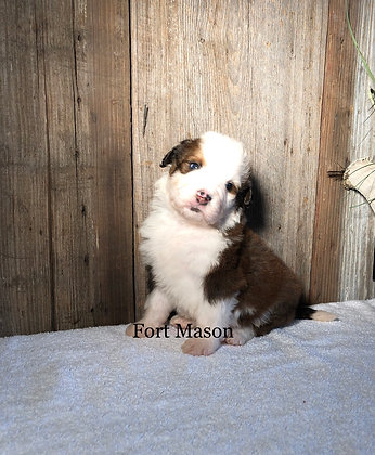 Olaf (Reserved)