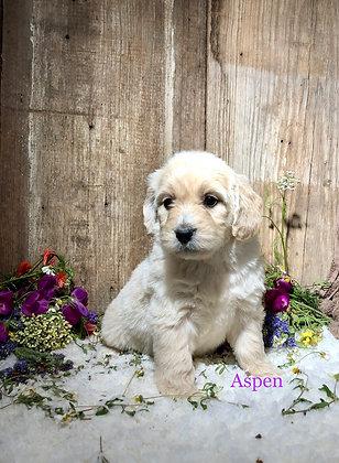*Aspen* (Reserved)