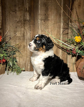 Woodrow (Reserved)
