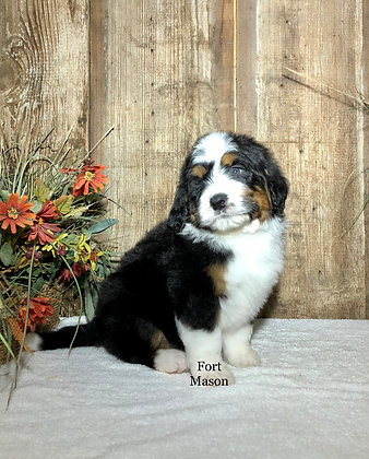 Quincey (Reserved)