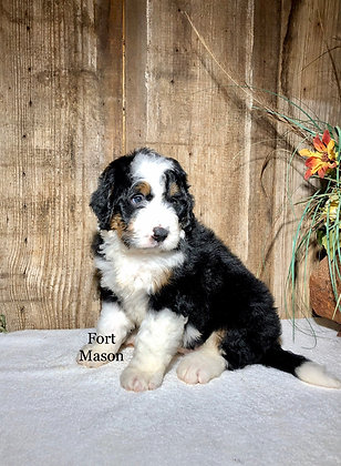 Champ (Reserved)