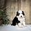 Thumbnail: Jasper (Reserved)