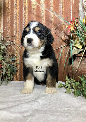 Vick (Reserved)