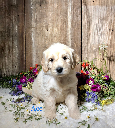 *Ace* (Reserved)