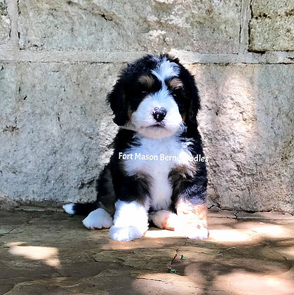 Doc (Reserved )