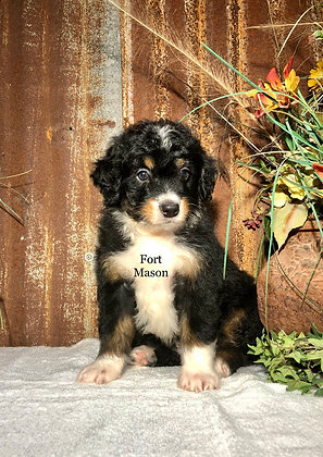 Flo (Reserved)