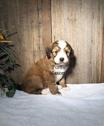 Nelson (Reserved)