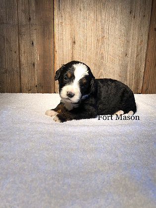 Pearl (Reserved)