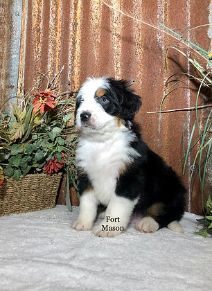 Walter (Reserved)