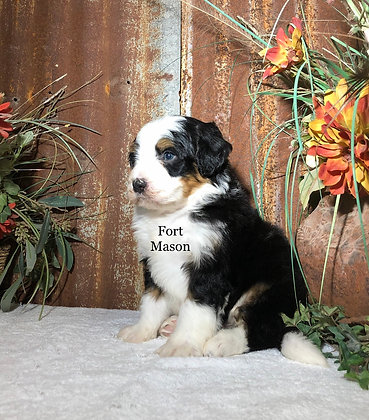 Zion (Reserved)