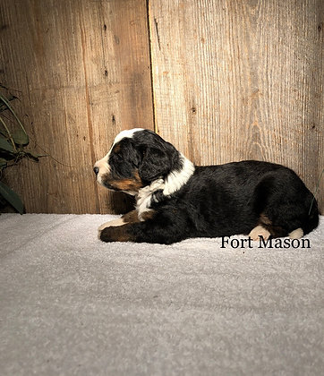 Pancho (Reserved)