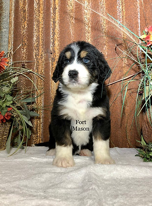 Vance (Reserved)