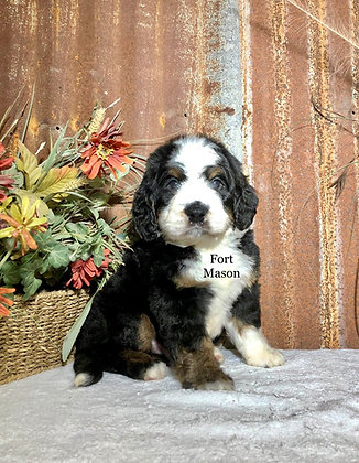 Archer (Reserved)