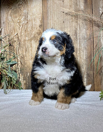 Peter (Reserved)