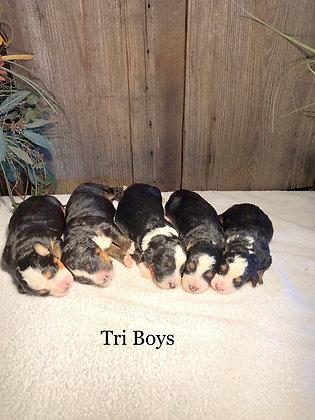 Brandy's Tri Boys