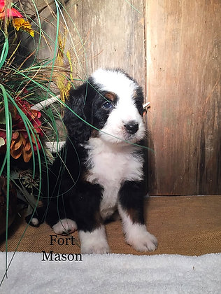 Foxie (RESERVED)