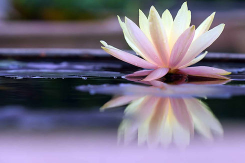 Lotus-Blossom_web.jpg
