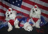 Cierra, Charmin and puppy