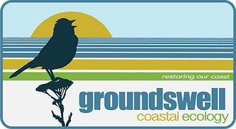 Groundswell Sun Sparrow.png