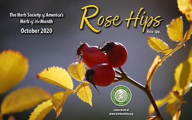 October 2020 HOM Rose Hips.png