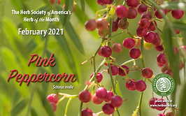 February2021 HOM Pink Peppercorn.png