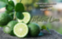 August 2020 HOM Makrut Lime.png