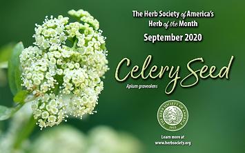 September 2020 HOM Celery Seed.png