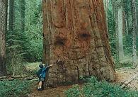 chamanisme et communiquer avec un arbre