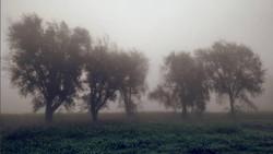Five sisters foggy