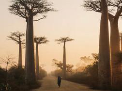 Madagascar's Plea for Help