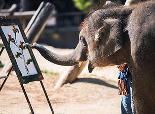 Elephant Schilderij