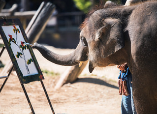 The Elephant in Your Claims Department