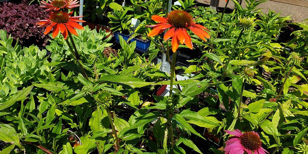 Perennial Gardening-Preparation & Care