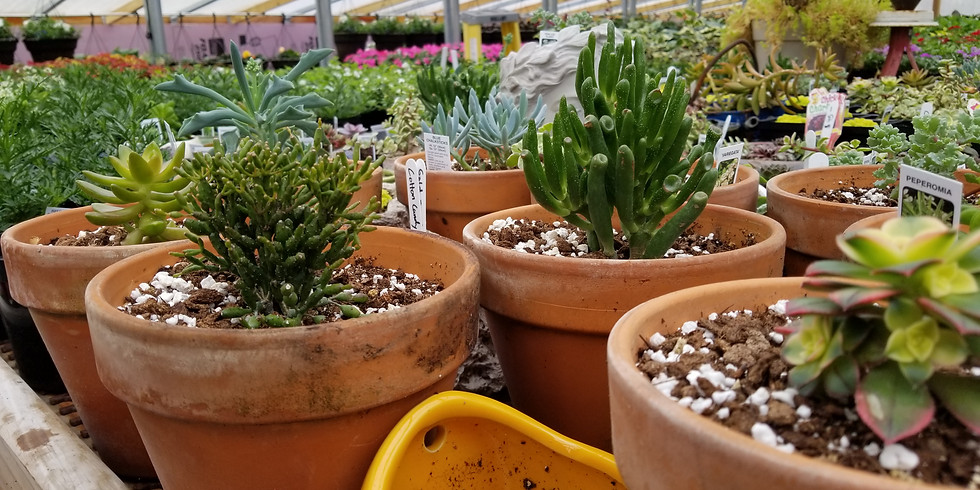 Succulents – Planting and Care