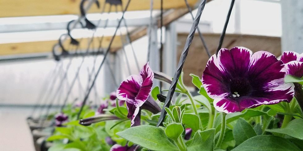Plant your own hanging basket