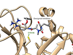 Protease Figure (1).png