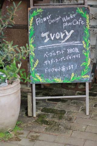 [ Ivory ]