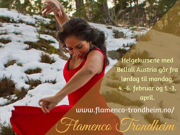 flamenco norge