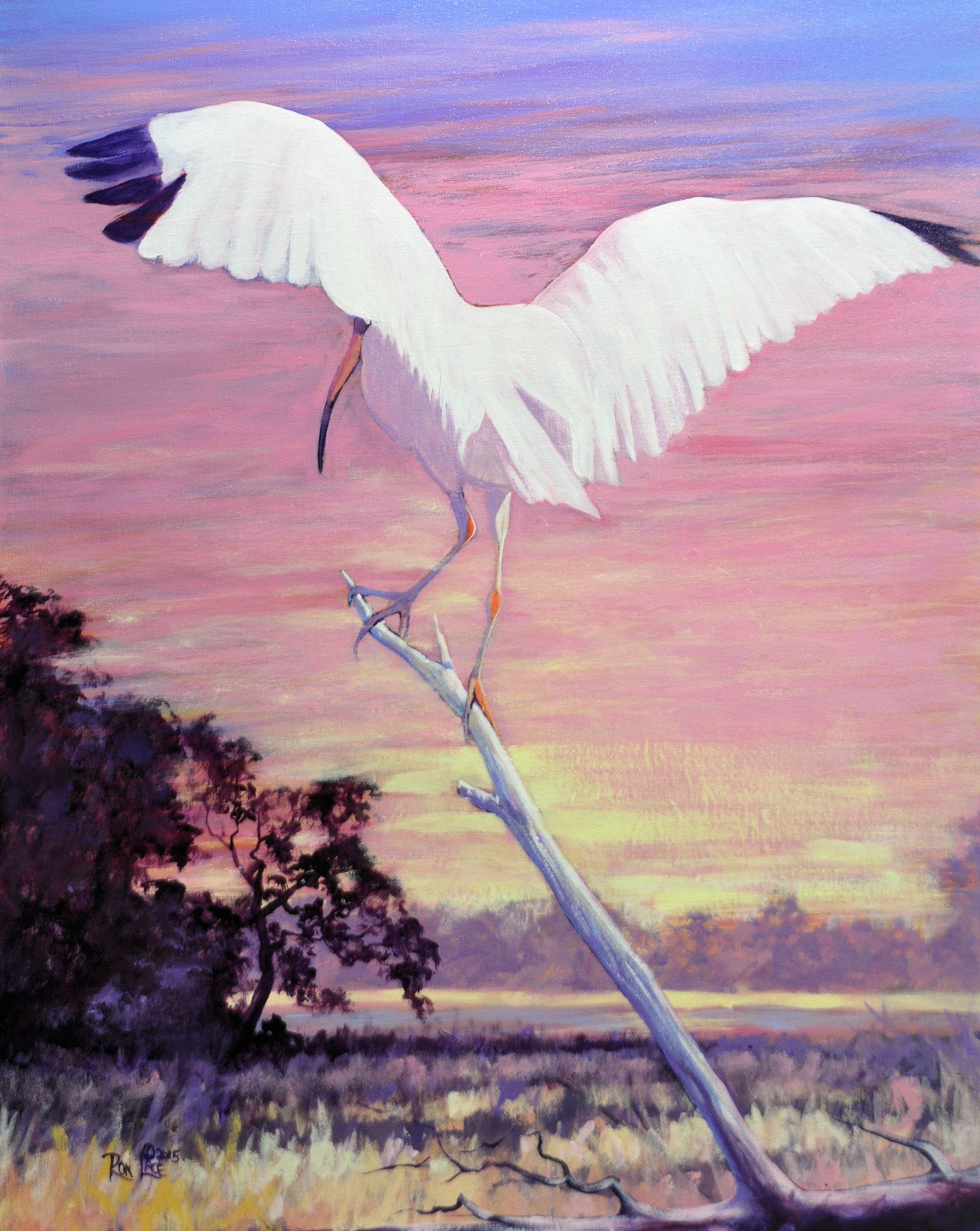 Enchanted Evening (Ibis)