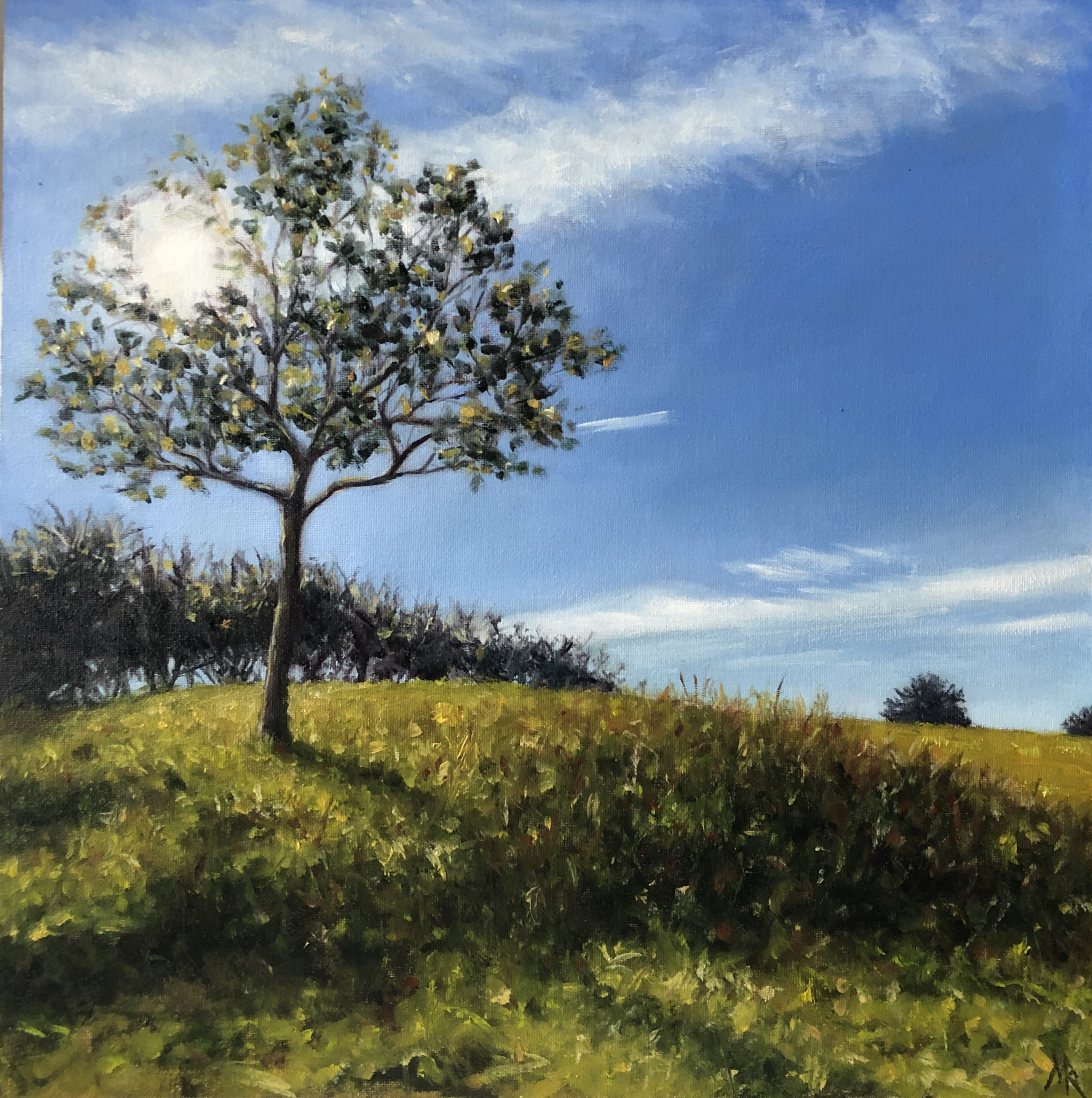 Sunlit Tree (Watlington Hill)