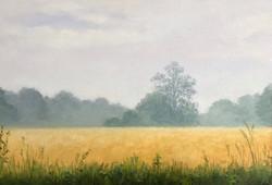 Misty Cornfields