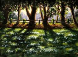 Sunlit Snowdrops, Swyncombe