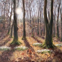 Woodland Snowdrops
