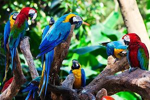 Birds of paradise amazon jungle tour.jpg