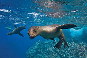 Galapagos Islands Sea Lion Snorkle .jpg