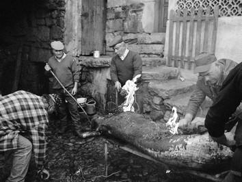 Matança do porco tradicional
