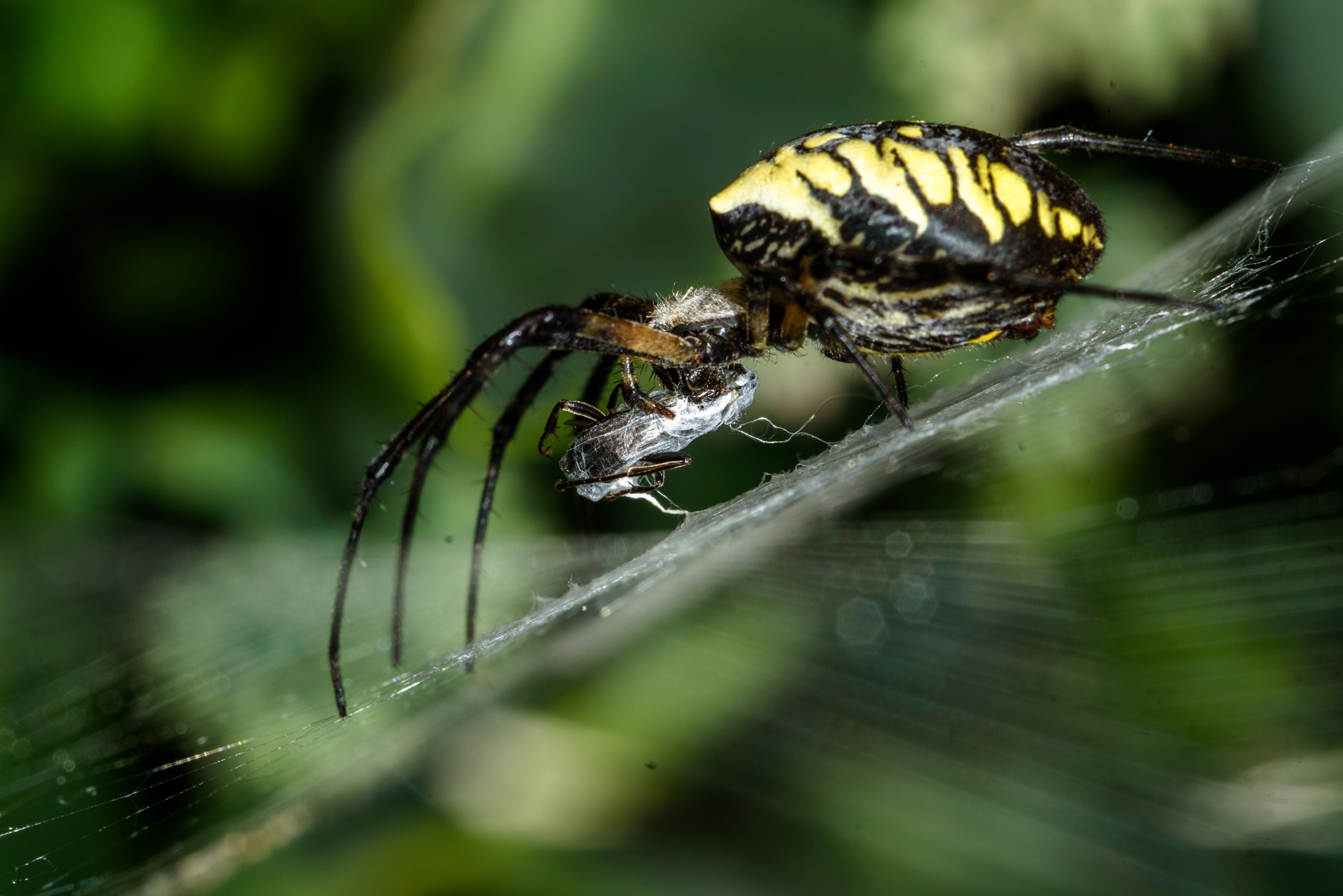 Spider Wrap