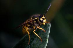 Buzzy1
